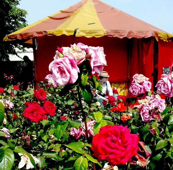 roses and tent
