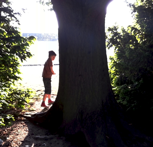 tree and boy