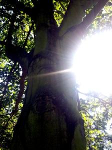 eye tree2