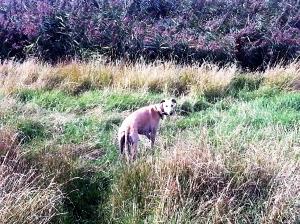 rudi reeds