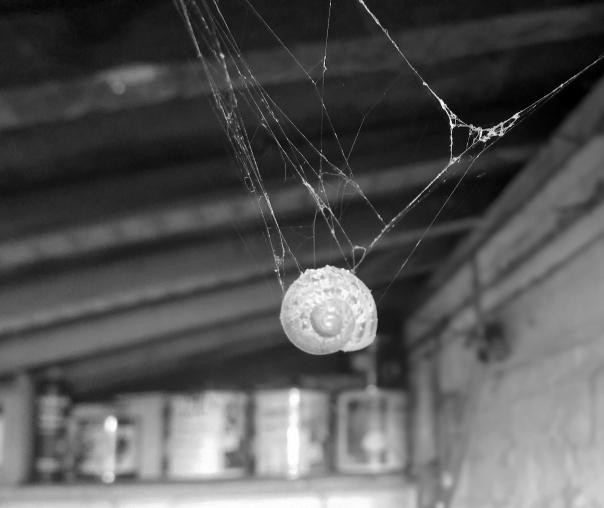 cobweb snail